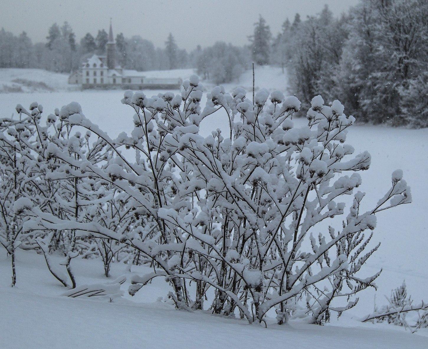 Мокрый снег итуман непокинут Саратовскую область— МЧС
